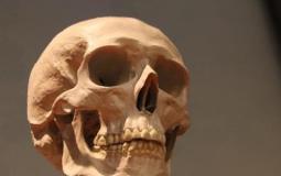 جمجمة بشرية- تعبيرية
