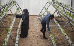 مزراعان في غزة (ارشيف)