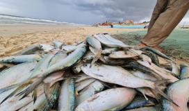 سمك بحر غزة