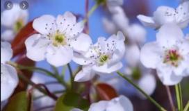 فصل الربيع.JPG