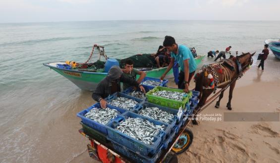 بالصور:صيادون يعملون على شاطئ بحر  قطاع غزة